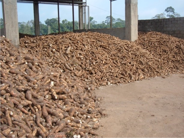 Matna Foods Ltd  Nigeria's leading Cassava Starch Manufacturer